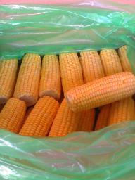Замороженная кукуруза (початок)