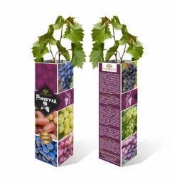 Саженцы Винограда в коробках