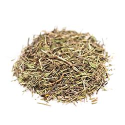 Зизифора, трава