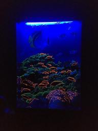 Сенсорное ультрафиолетовое панно «Подводный мир»